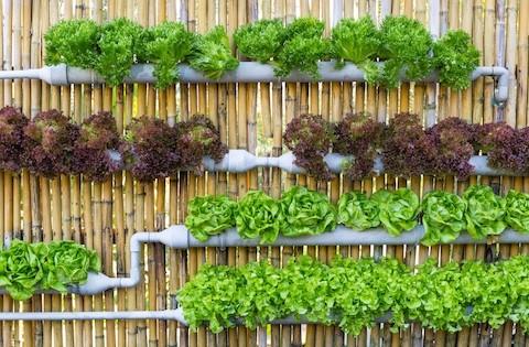 Mit Vertikalen Garten Langweilige Flachen Verschonern