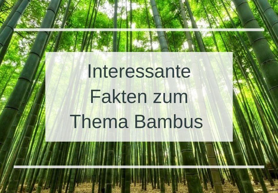 Fakten_zum_Thema_Bambus