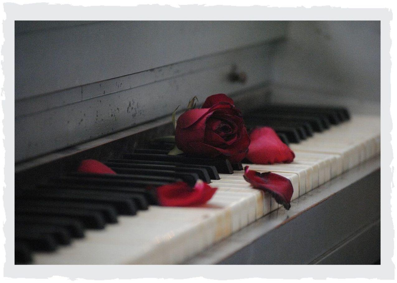 Klaviatur-Rose
