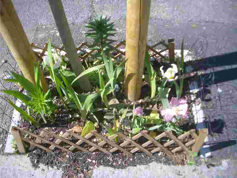 baumscheibe-bepflanzen