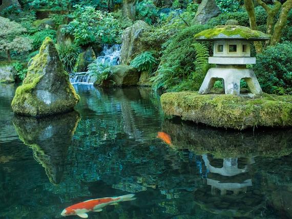 Teich-japanischer-Garten