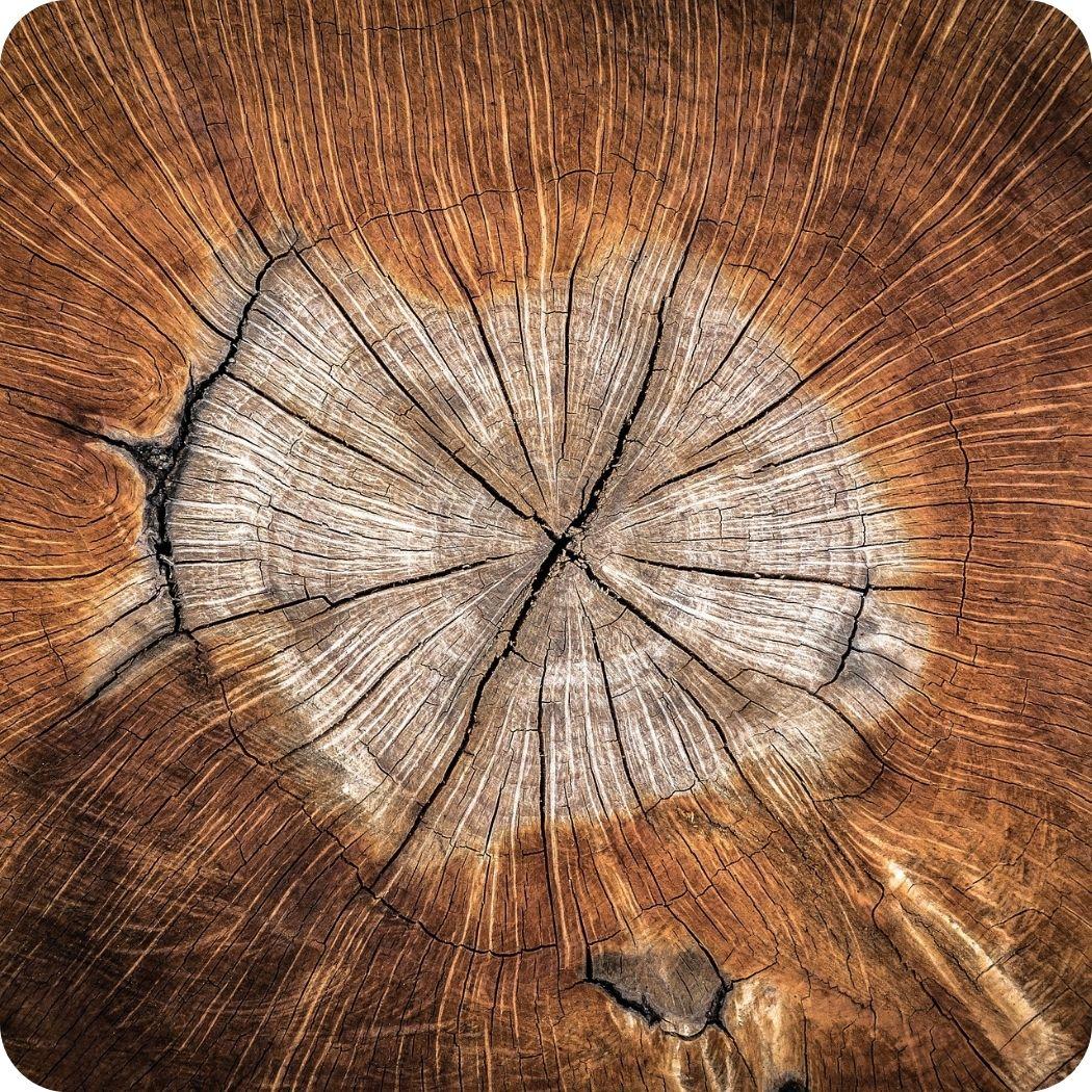 Detailansicht-Baumstamm