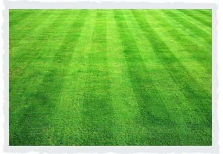 gepflegter-Rasen