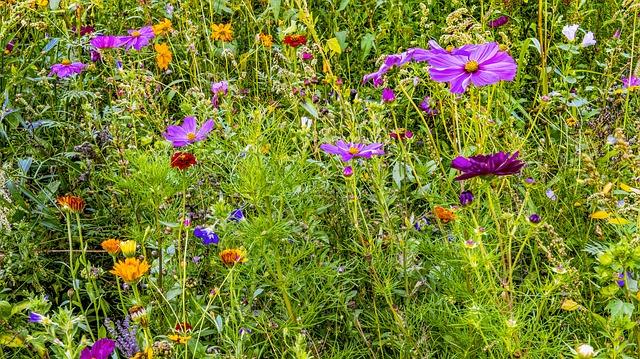 guerilla-gardening-wilde-blumen