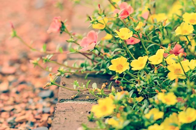 guerilla-gardening-blumenbeet