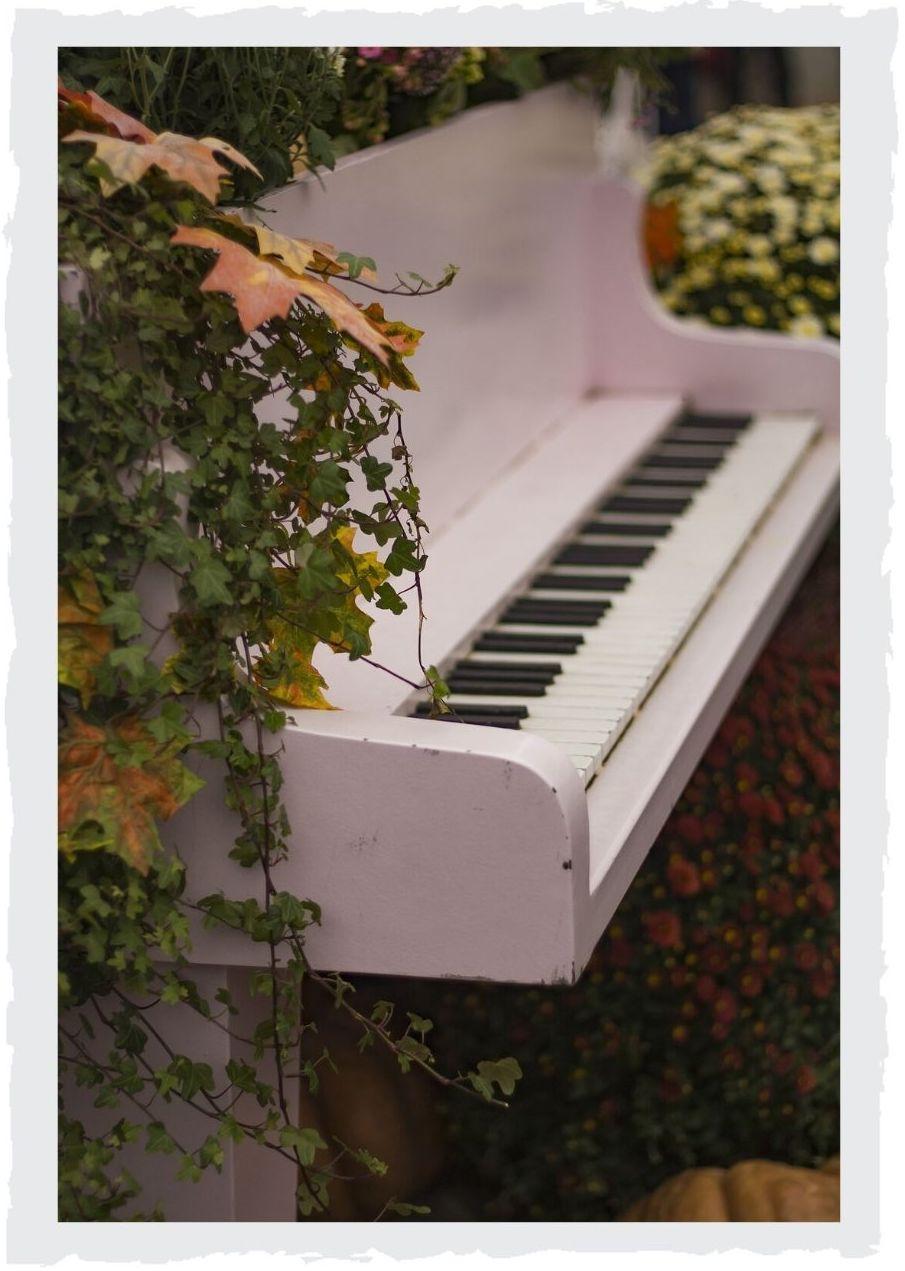 bewachsenes-Klavier