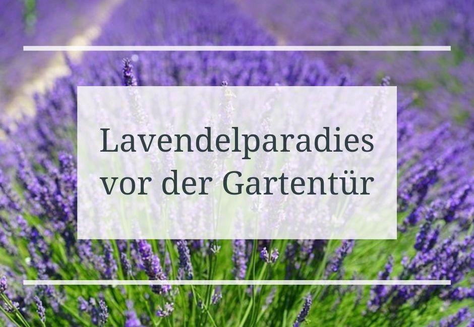 lavendelparadies