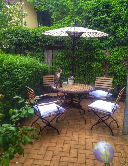 Asia-Schirm-mit-Nachbars-Katze