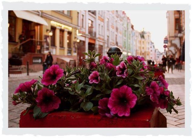 Blumenkubel-Stadt